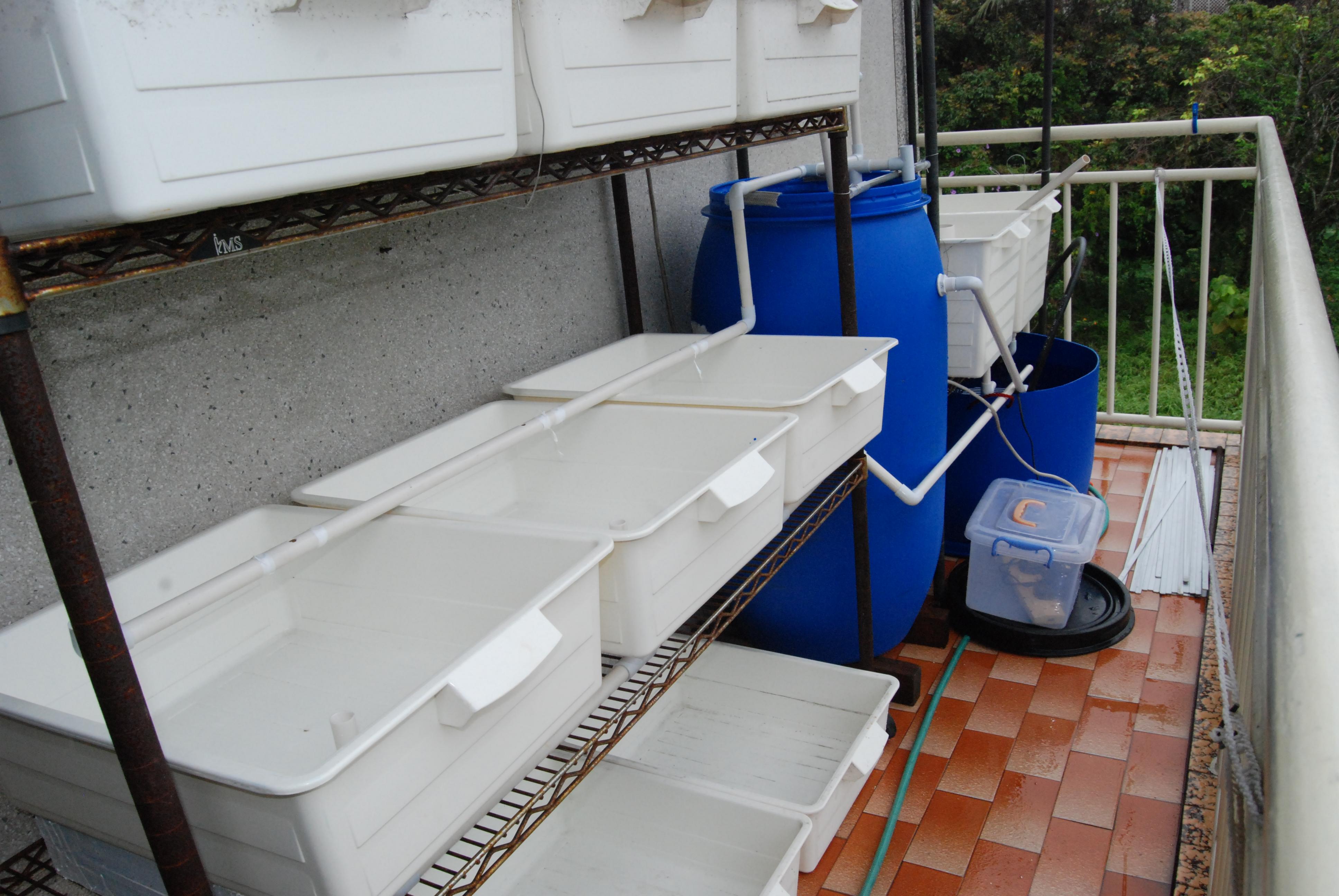 Aquaponics red wines hydroponics aquaponics and slow for Balcony aquaponics